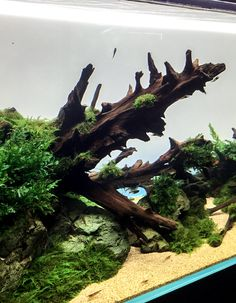 ポスターの違和感 | 京都精華大学水槽学部 Nano Aquarium, Aquascaping, Bald Eagle, Terrarium, Plants, Animals, Terrariums, Animales, Animaux