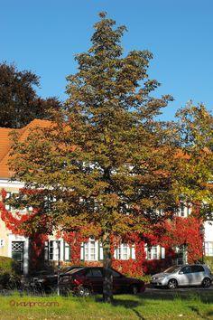Goldener Herbst in #Berlin