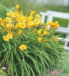 filler space flower-bushes