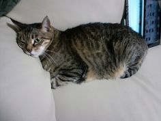 Today's cat on 15th May 2012 by ganchan2, via Flickr