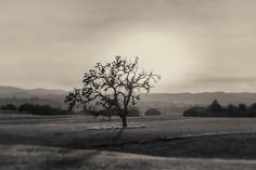 Templeton California Landscape Black & White by MScottPhotography