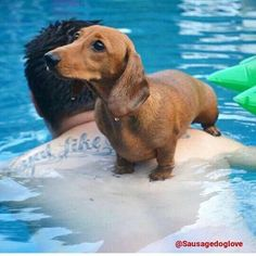 Doxie with Daddy in the pool ♥