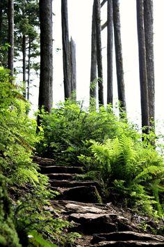 Stones steps of Rainbird Trail in Ketchikan, Alaska
