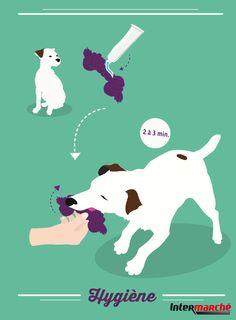 #Astuce : brosser les dents de votre chien. 1) Appliquer une couche de pâte dentifrice pour chien sur son jouet préféré.2) Jouer avec lui 2 ou 3 minutes pour lui faire mordre et mâchouiller le jouet enduit de dentifrice !