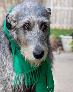 .you look fab in green u wear it well my dear www.capemaysbest.com