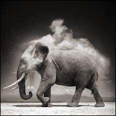 Les animaux africains de Nick Brandt animal afrique savanne nick brandt 01 photographie art
