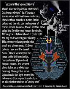 """A bit of a stretch but it's plausible. And with """"sex"""" involved it's like orgasm=enlightenment/epiphany Spiritual Enlightenment, Spiritual Wisdom, Spiritual Awakening, Human Spine, Pseudo Science, Pineal Gland, Spirit Science, Tantra, History Facts"""