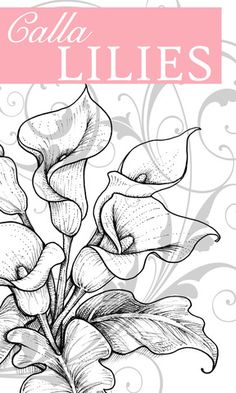 lily coloring pages | Flourishes New Release - Calla Lilies