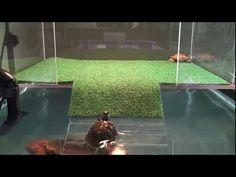 sliders first visit to acrylic above tank basking platform part three - YouTube