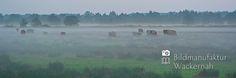 awesome Fotografie »Rinder in Cuxhaven Duhnen«,  #Naturansichten