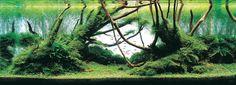 Top 10 aquascapes in 2008 ADA Aquatic Plants Layout Contest - 2nd Place
