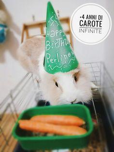 Il compleanno del mio coniglio