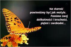 Jak motyle.