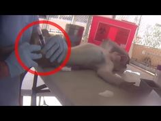 Monkeys Abused by Notorious Laboratory Dealer   A PETA Eyewitness Invest...