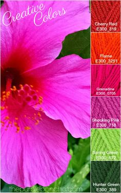 Creative Colors – Hibiscus – Pink Palette! – The Purple Poncho