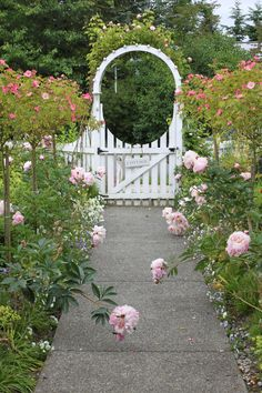 Cottage Walkway in Bloom~Beautiful fence...