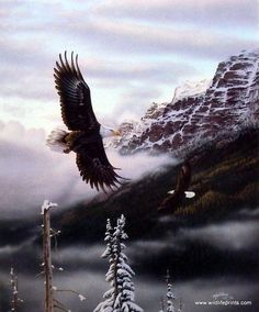 "As the bald eagle gets higher in altitude the snow caps on the mountains start to show. This print is available unframed in size 7.25""x9"""