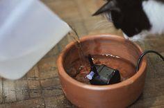 Como fazer uma fonte de água para gatos Cat Tree, Nalu, Diy Accessories, Alice, Pet Cats, Shelves For Cats, Pet Furniture, Pets, Pet Toys