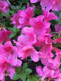 Birds, Plants, Pink, Feels, Flowers, Bird, Plant, Pink Hair, Roses