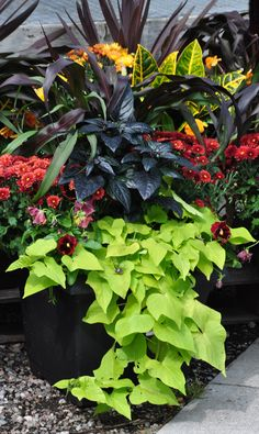 fresh inspiration for your fall containers plantings, container gardening, flowers, gardening