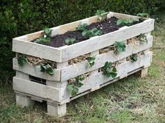 Maak een simpele, verhoogde plantenbak voor aardbeien met pallets.