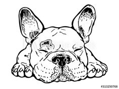 Vector illustration of french bulldog. - Comprar este vetor do stock e explorar vetores semelhantes no Adobe Stock Adobe, Cute French Bulldog, Drawing Sketches, Illustration, Clip Art, Puppies, Explore, Simple Lines, Stuff To Buy