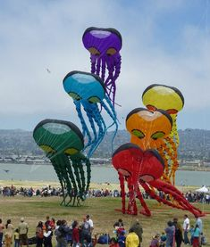 so cool! #huge #kites #outside take a click to http://jollylama.com/ for some other awesome affordable kites!