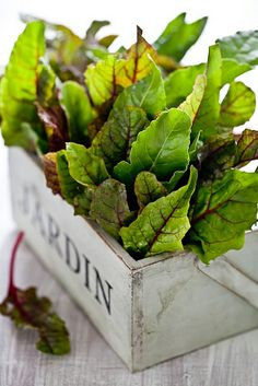 baby swiss chard #food #recipes #eat #greateating #saveur #epicurean #healthy #health #fit