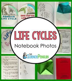 A Peek into my Notebook: Life Cycles Science Notebook Photos  thesciencepenguin.com