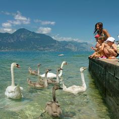 Children love feeding swans at Lake Garda, Italy | Flickr - Photo Sharing!