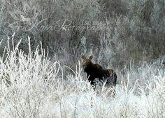 Alberta wildlife <3