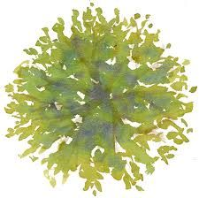 Tree Plan View Png Gallery for > tree plan view Landscape Sketch, Landscape Drawings, Landscape Design, Watercolor Clipart, Watercolor Trees, Photoshop Images, Photoshop Elements, Tree Plan Photoshop, Tree Plan Png