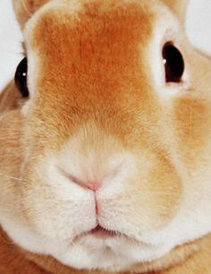 Previous pinner wrote: My Casimir he's a mini Rex. I say gorgeous , elegant closeup.