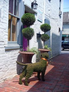 Love these Two Topiaries - with the Topiary Dog
