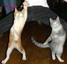 Dançando,dançando, dançando!