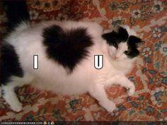 cute kitten heart markings cat pic