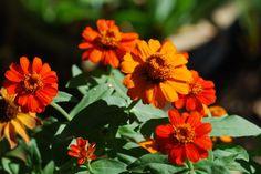 087 Flowers | Orange