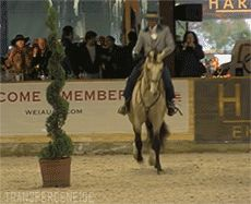 "transperceneige: ""Andiamo and Carlos Carneiro 