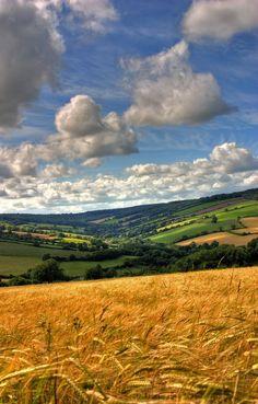 devon uk | Barley crops and hills