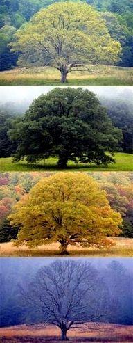 der Baum als Kalender