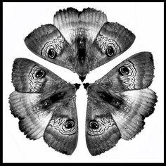 Moth Circle