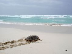 Sea turtle conservation projects in Cape Verde