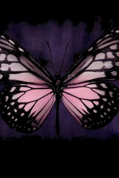 Pastel Pink Butterfly