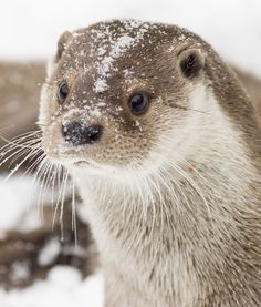 15 Adorable Otters   PawNation