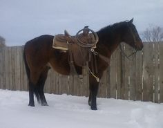 Horses for Sale American Quarter Horse, Quarter Horses, Western Horsemanship, Cattle For Sale, Horse Classifieds, Ranches For Sale, Barrel Horse, Home On The Range, Horses For Sale