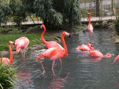 Flamingo Bird | Amazing images of Flamingos