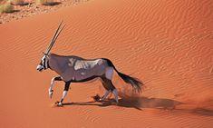 WWF Deserts