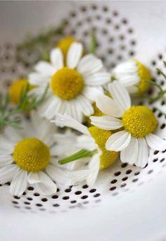 Daisies~