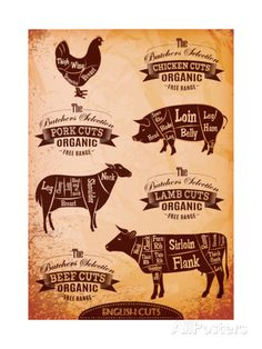 Diagram of Cut Carcasses Chicken, Pig, Cow, Lamb Posters by 111chemodan111 at AllPosters.com