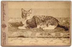 They loved their pets back them just like we do now.  from ancestorville genealogy